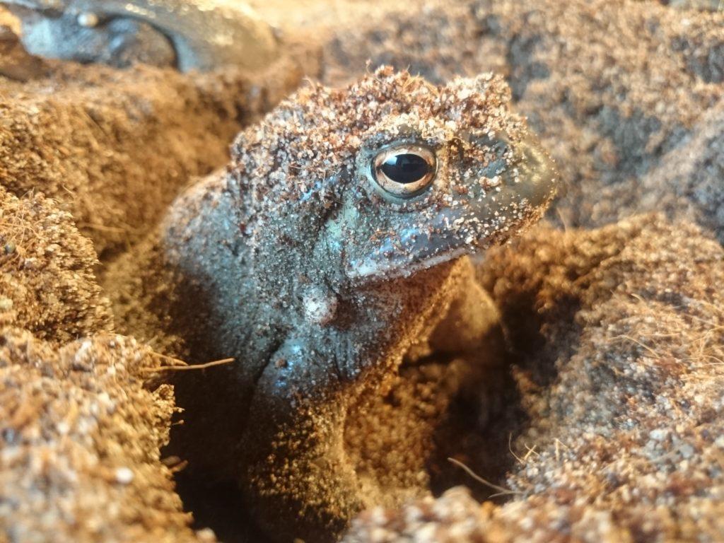 Psilohuasca.com - Toad medicine image